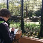 Lisa sketching at the lion cage.